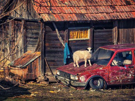 Photo free house, barn, hut