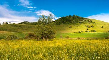 Фото бесплатно холмы, цветы, пейзаж