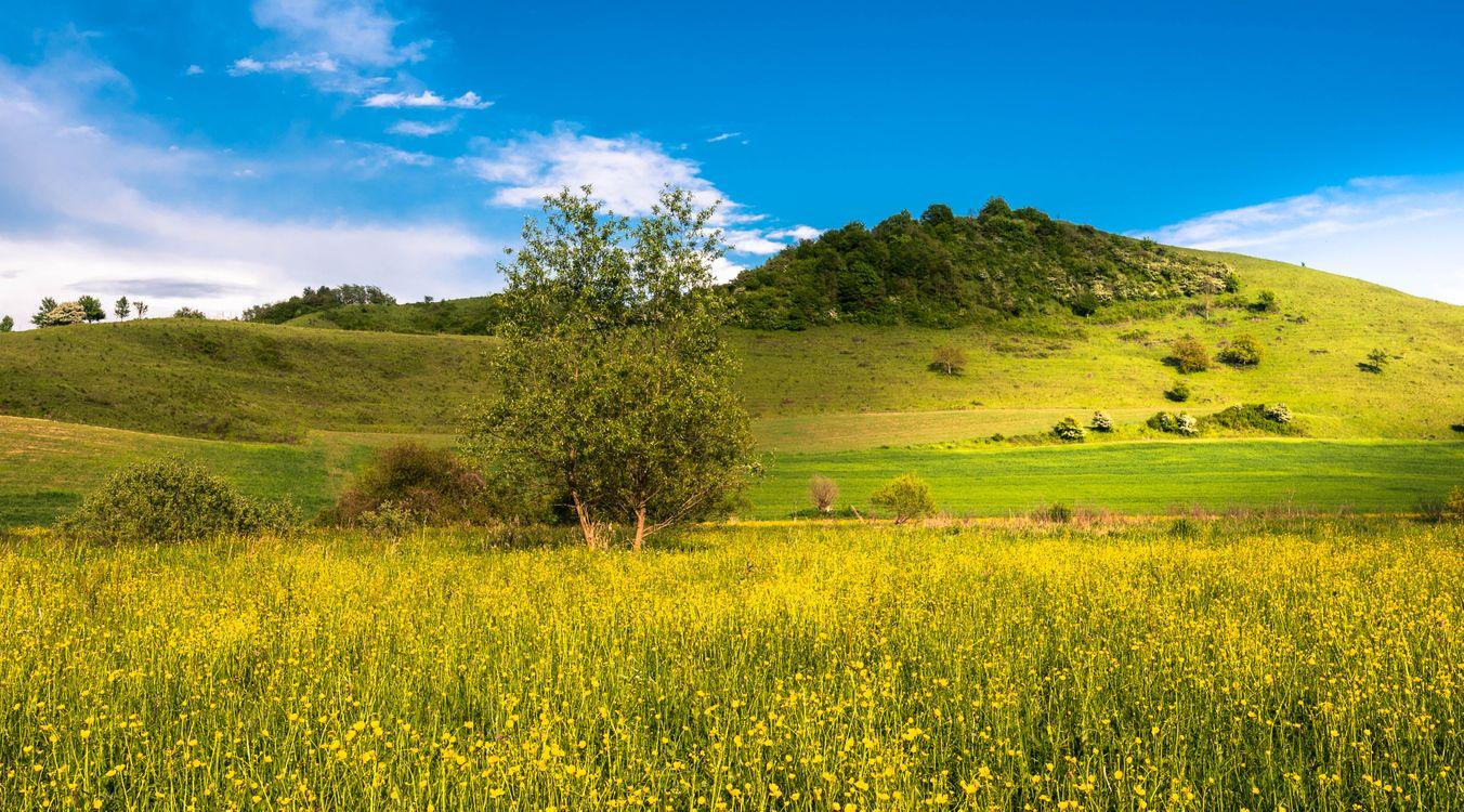 Фото бесплатно холмы, цветы, пейзаж - на рабочий стол