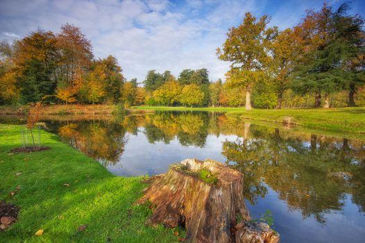 Photo free stump, autumn, park