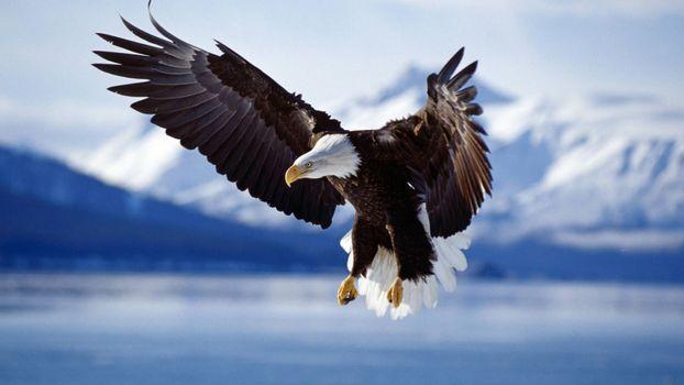Photo free birds, wildlife, bird of prey