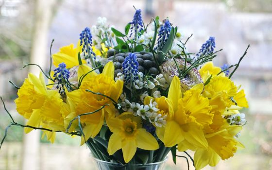 Photo free flowers, bouquets, daffodils