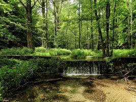 Фото бесплатно лес, речка, водопад