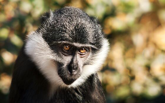 Photo free monkey, sight, close