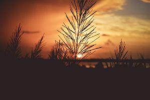 Бесплатные фото Завод, рассвет, стебель, plant, dawn, stem