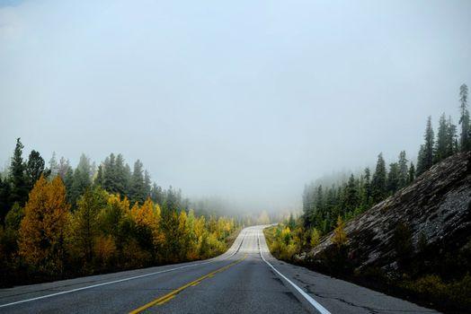 Photo free tree, mountains, fog