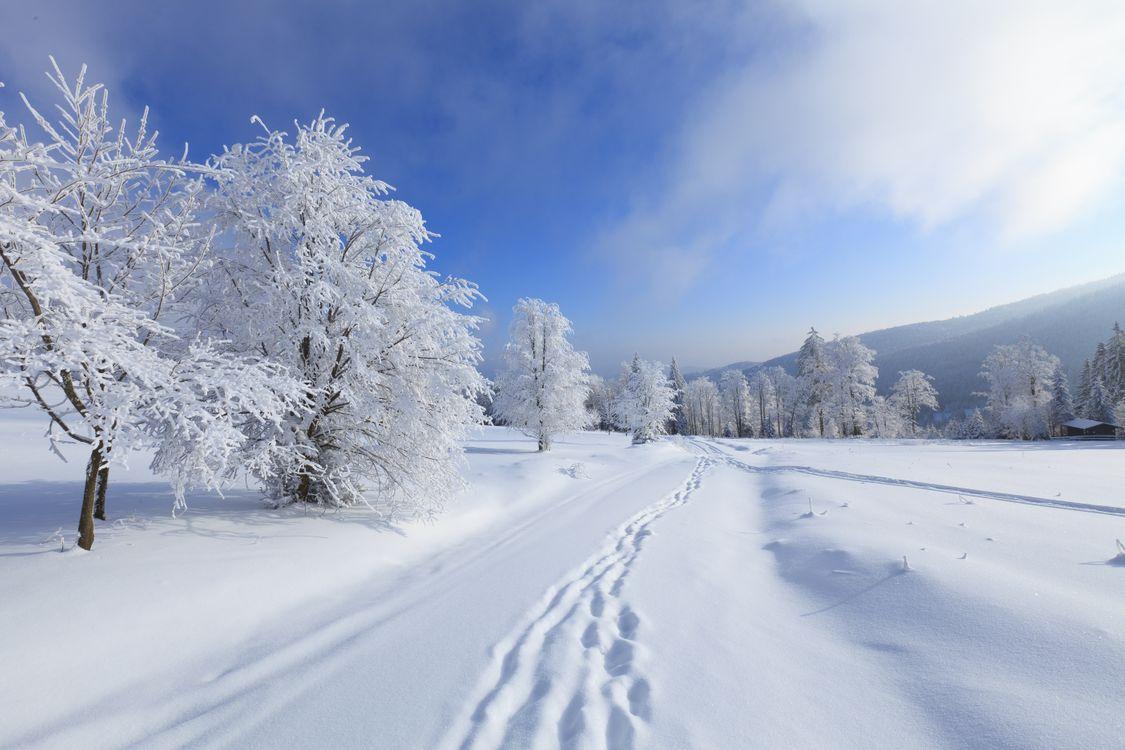 Обои деревья, зима, следы картинки на телефон