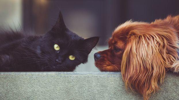 Фото бесплатно кошка, собака, лежа