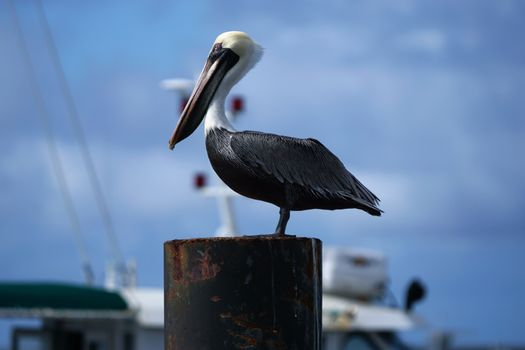 Фото бесплатно птица, док, лодка