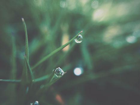 Фото бесплатно роса, растения, трава