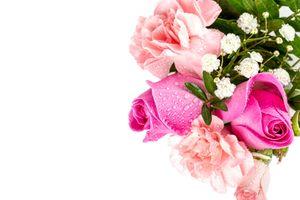 Фото бесплатно цветы, роза, розовый цвет