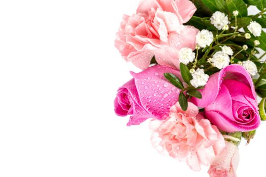 Photo free flowers, rose, pink color
