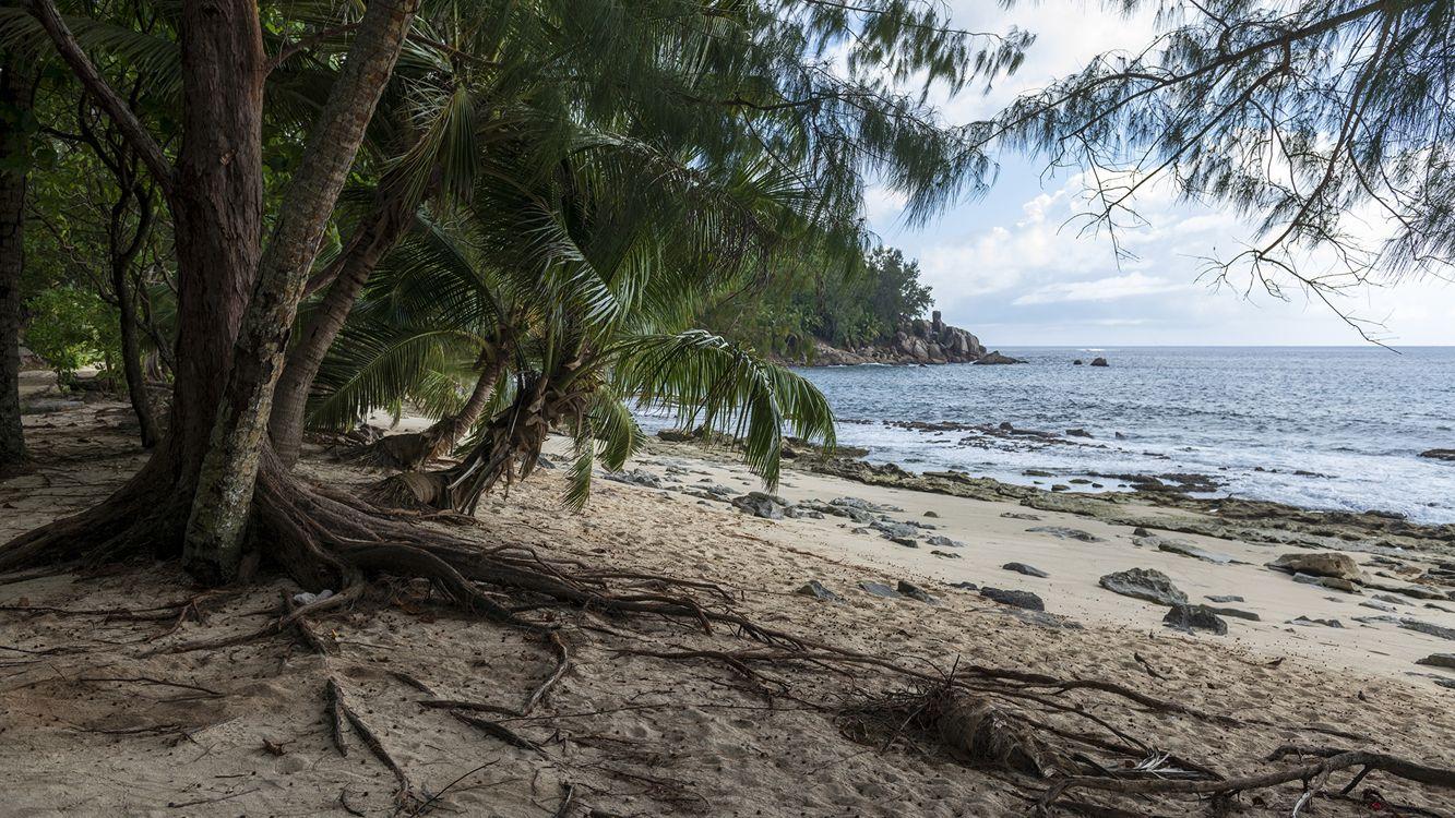 Фото бесплатно Сейшельские острова, тропический остров, пляж - на рабочий стол
