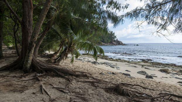 Фото бесплатно Сейшельские острова, тропический остров, пляж