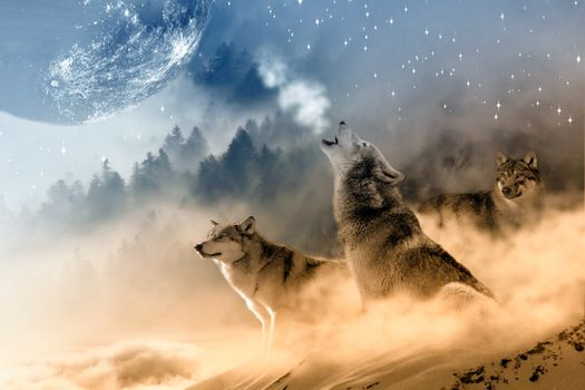 Photo free wolves, howl, moon