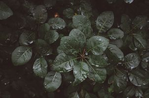 Фото бесплатно листья, капли, влага