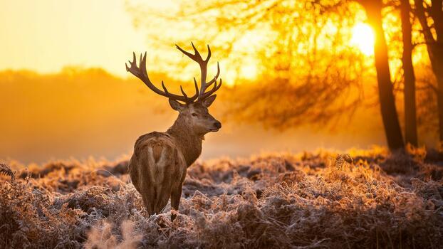 Фото бесплатно белохвостый олень, осень, утро