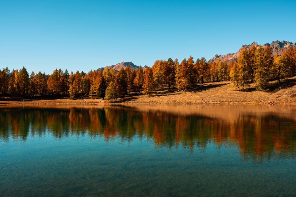 Обои деревья, озеро, осень картинки на телефон