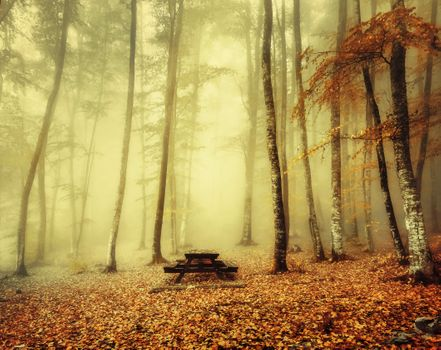 Photo free landscape, morning, autumn leaves