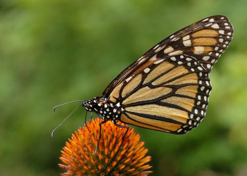 Photo free butterflies, insects, pollination