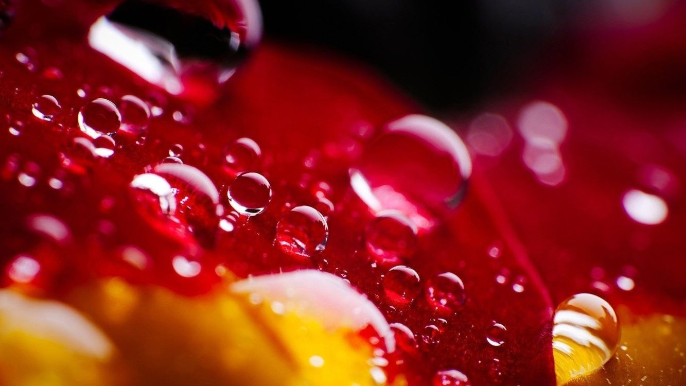 Фото красный яркий цвет - бесплатные картинки на Fonwall