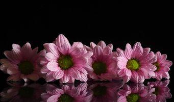 Бесплатные фото георгин,цветы,цветок,цветочный,макрос,макро,цветочная композиция