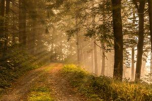 Скачать лес, деревья фото с сайта fonwall
