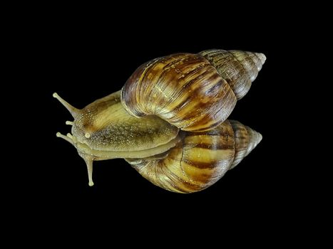 The pictures on the screen saver of snails, gastropoda free