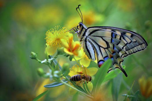 Фото бесплатно насекомые, бабочка, макросъемка