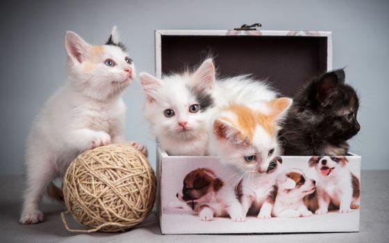 Фото бесплатно котята, коробки, кошка