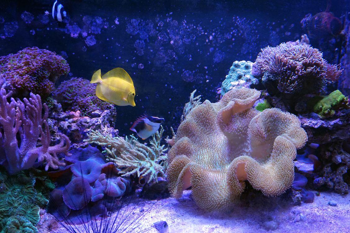 Фото бесплатно морской аквариум, кораллы, рыба, фиолетовый, дно, морское дно, красивый фон, подводный мир