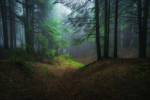 Фото бесплатно лес, деревья, туман