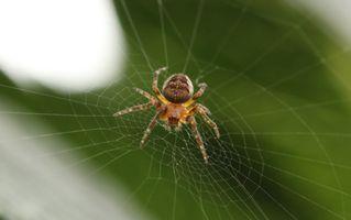 Photo free invertebrate, leaf, spider web
