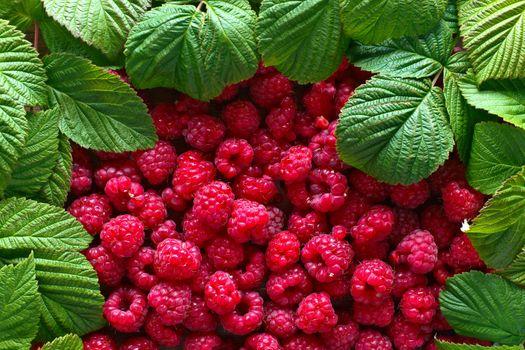 Photo free raspberries, fruits, berries
