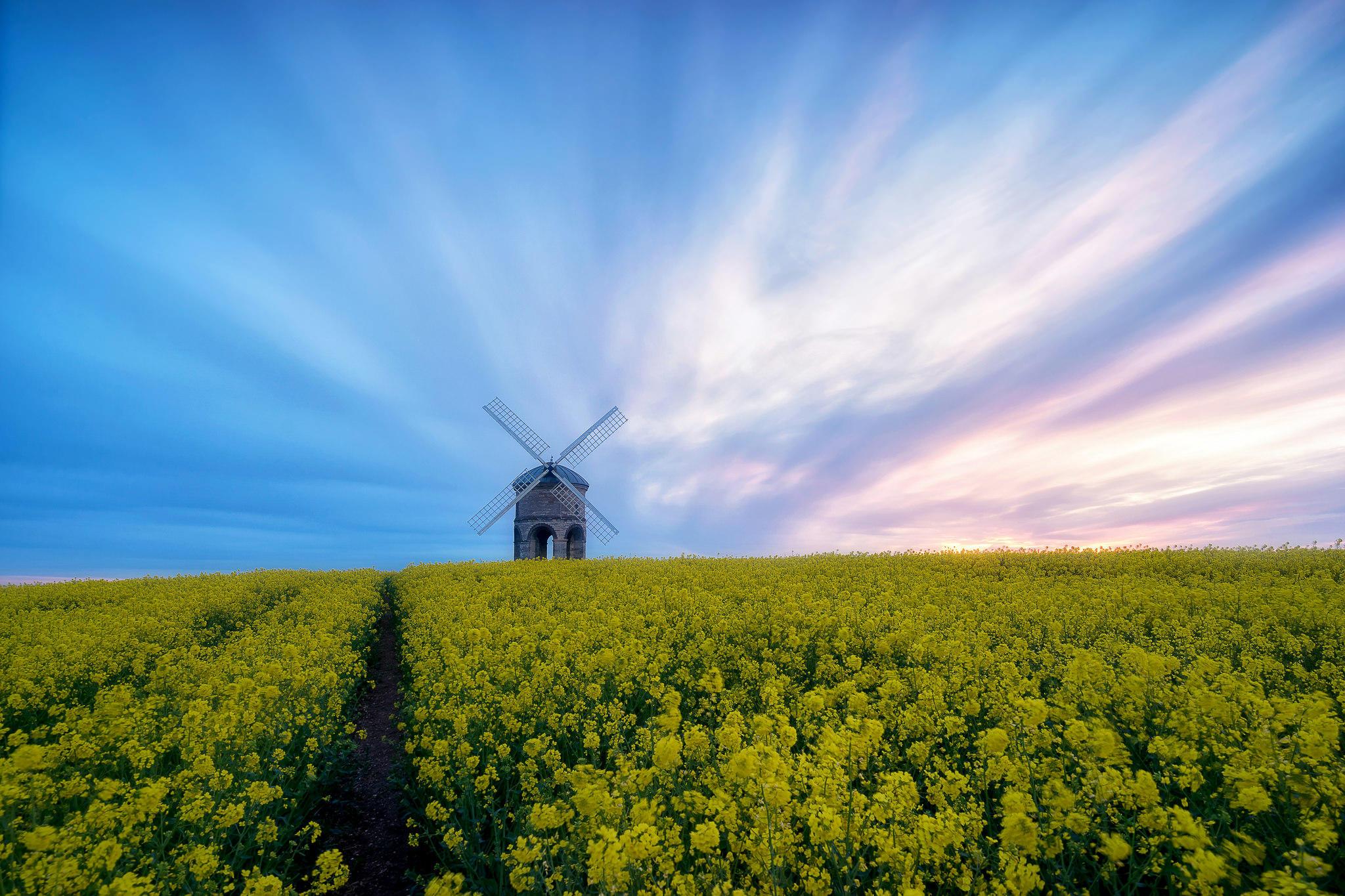 Обои закат, поле, цветы, мельница