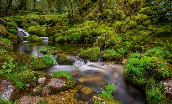 Фото бесплатно природа, Испания, брук