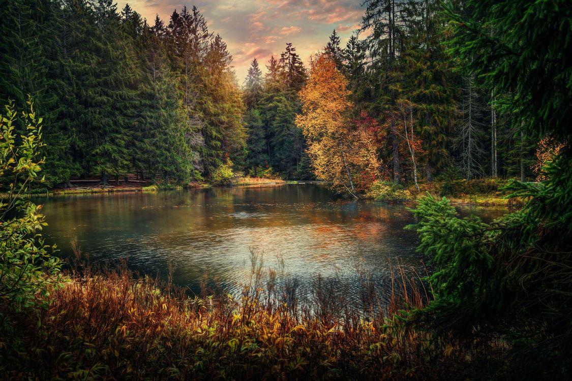 Фото бесплатно озеро, осень, лес, деревья, пейзаж, пейзажи