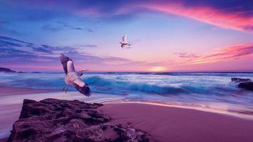 Фото бесплатно закат, море, цапли