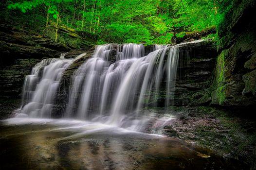 Фото бесплатно деревья, Пенсильвания, Ricketts Glen State Park