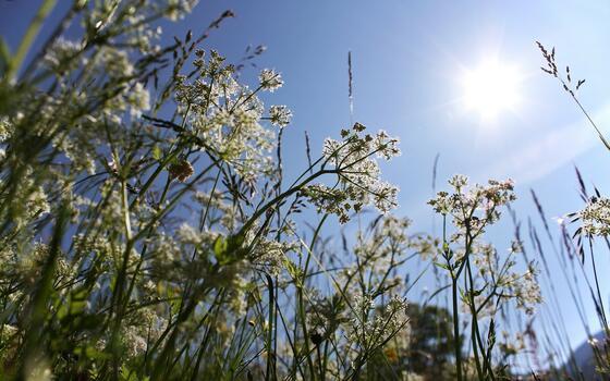 Фото бесплатно растение, ботаника, цветок