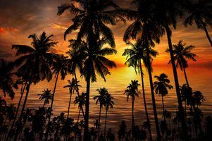 Фото бесплатно море, закат, силуэты