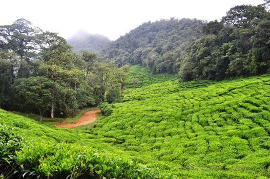 Photo free shrub, green, rice field