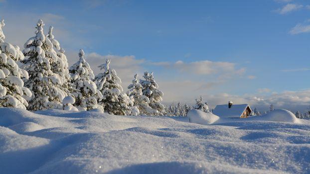 Заставки сосны, зима, дом