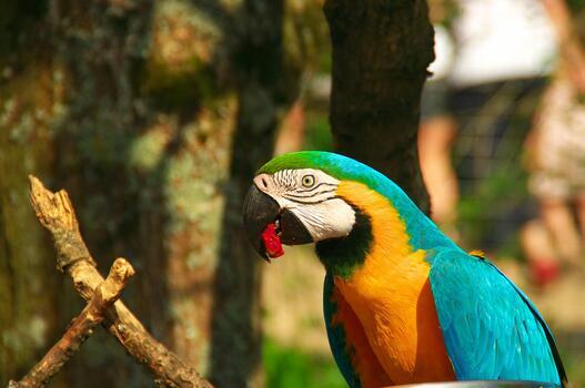 Photo free colorful, beak, birds