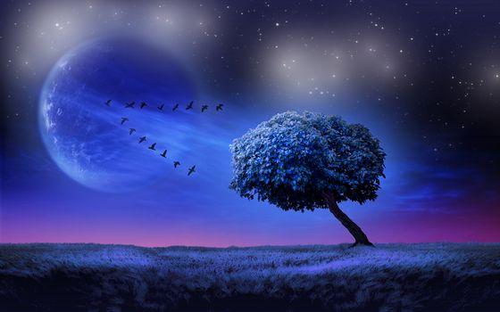 Фото бесплатно пейзаж, стая птиц, поле