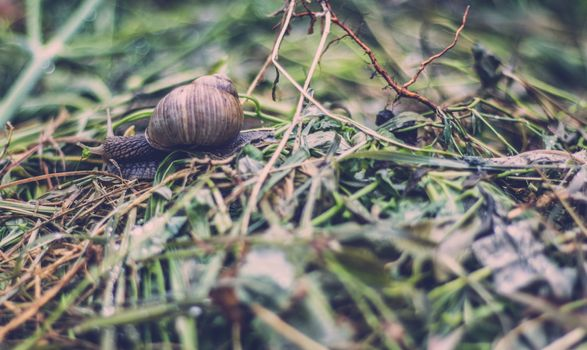 Photo free snail, grass, insect