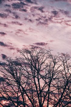 Photo free tree, branches, sky