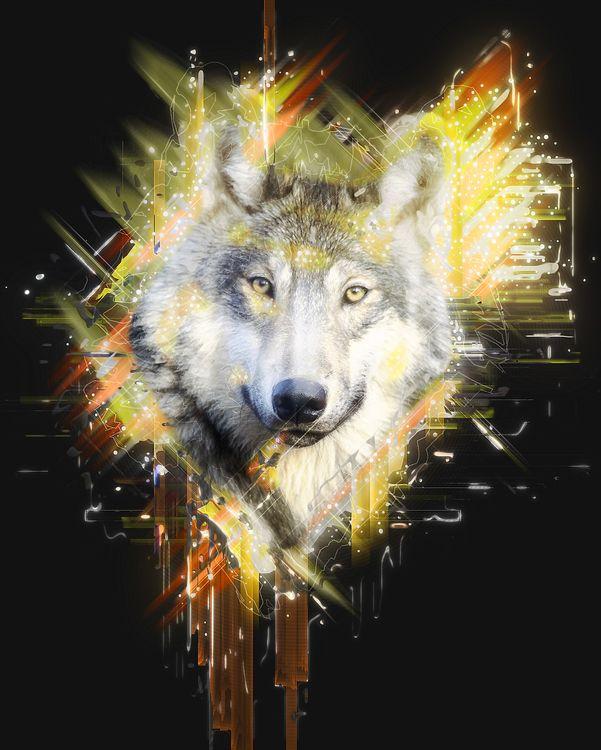Wolf · free photo