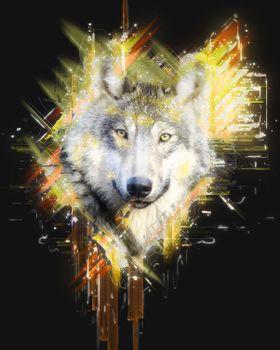Волк · бесплатное фото