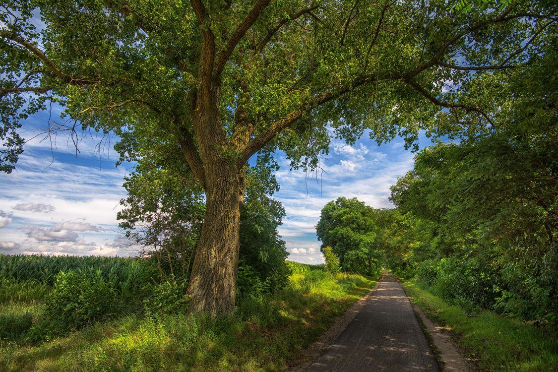 Фото бесплатно дорога, поле, лес, деревья, пейзаж, пейзажи